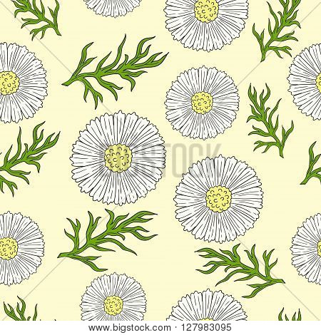 Pattern with camomile and leaves hand drawing. Daisy flowers.
