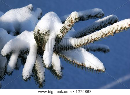Winter Snow On Branch