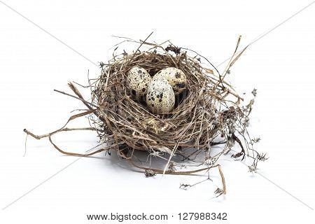 Real bird nest with eggs isolated on white background