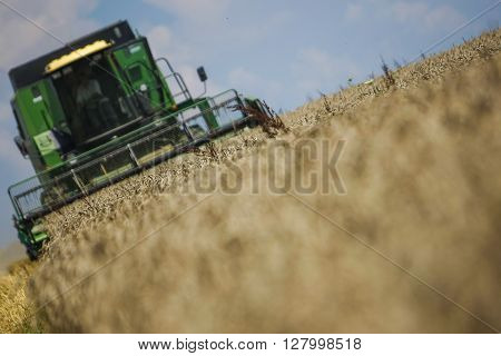 Working harvesting combine in the field of wheat with selective focus on blue cloudy sky