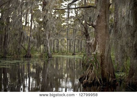 Swamp near New Orleans, Louisiana