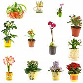 image of nepenthes  - collage of indoor plants of different varieties - JPG