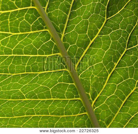 Leaf Surface Background
