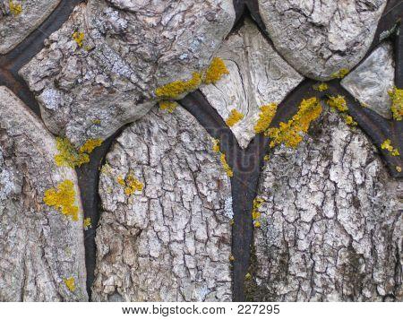 Einen alten Baum gewachsen über Eisen Zaun