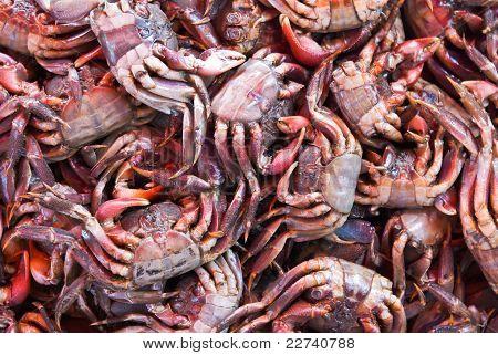 Meder's Mangrove Crab