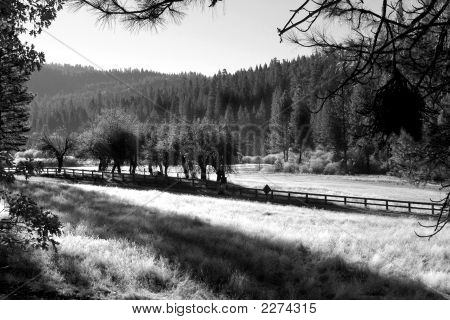 Frosty Morning At Wawona
