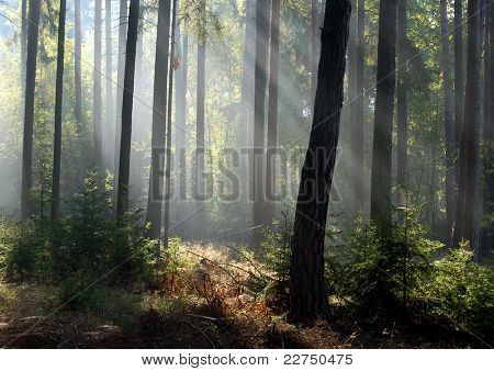 sunrays in Bohemian forest