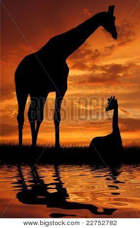 Two giraffe over sunrise