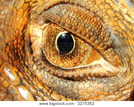 Iguana'S Eye