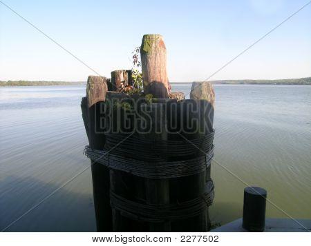 Peer In The Potomac River