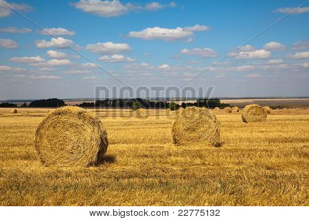 Haybale Landscape