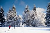 Cross-country skiing: young man cross-country skiing on a lovely sunny winter day poster
