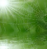 foto of spider web  - spider - JPG
