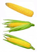 stock photo of corn-silk  - Set of corn isolated on white background - JPG