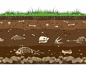 Soil With Dead Animals. Horizontal Seamless Earth Underground Surface With Dinosaur And Lizard Bones poster