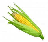 image of corn-silk  - corn isolated on white background - JPG