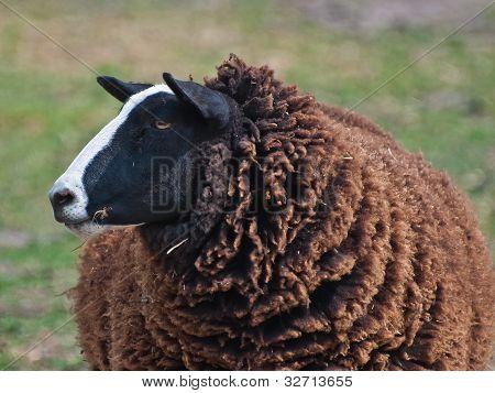 I Am The Black Sheep