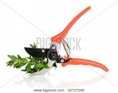 Pruner with branch isolated on white