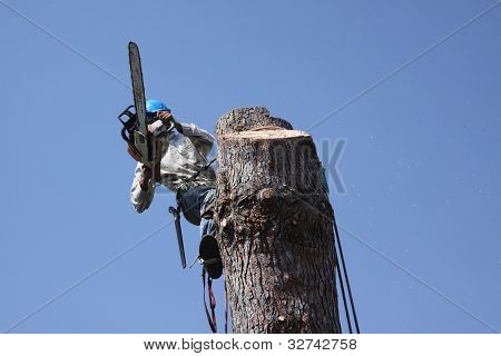 Cutting down a tree