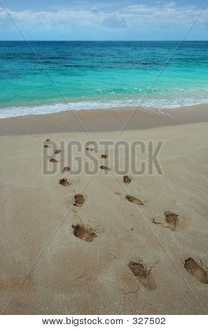 Footprints On A Tropical Beach.