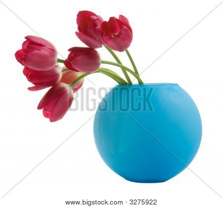Red Tulip In Blue Vase