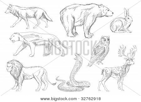 Wild Animals Vector Set