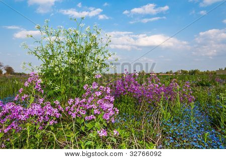 Flowering Herbs In Springtime