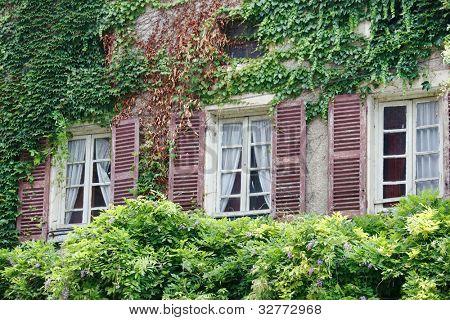 Ivy house revestido