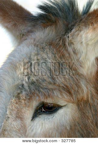 A Burros Eye