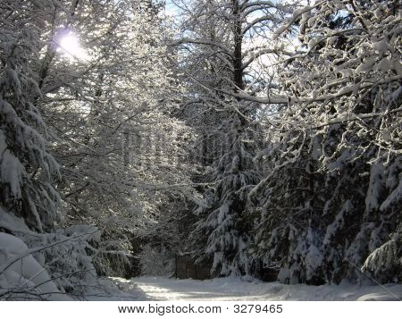 Sunshine Through Snowy Branches On A Winter Path In Whistler British Columbia