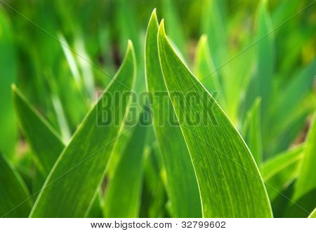 Green leaf in sunlight. Composition of nature.