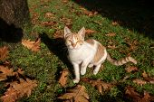 Kitty Looking At Camera With Autumn Background poster