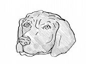Retro Cartoon Style Drawing Of Head Of A German Shorthaired Pointer, A Domestic Dog Or Canine Breed  poster