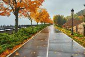 Autumn Park, Rainy Background, Autumn Landscape Background Rain Texture In An October Park, Walk In  poster