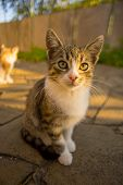 Tabby White Kitten Sitting In The Sunny Yard On A Stone Floor. poster