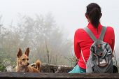 Female Hiker Sitting On Bench With Her Dog And Looking Into Foggy Distance. Hiking, Pets, Animal Fri poster