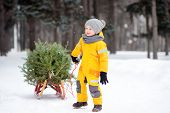 Little Boy Carries A Christmas Tree On A Sled To Take It Home From Winter Forest. Christmas Holidays poster