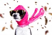 Chic Fashionable Diva Luxury  Cool Dog With Funny Sunglasses, Scarf And Necklace, Isolated On White  poster