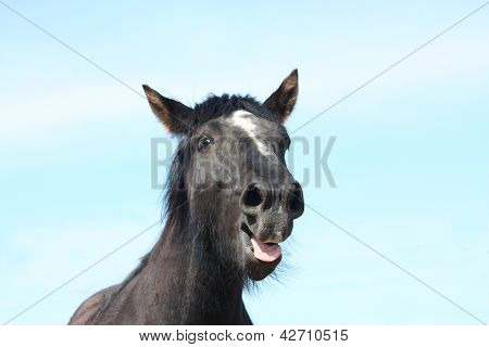 Portrait Of Black Yawning Horse