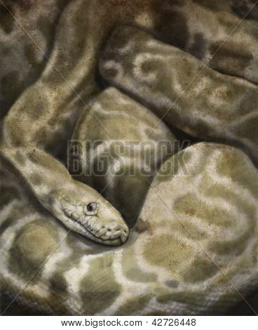 Sketch made with digital tablet of boa constrictor