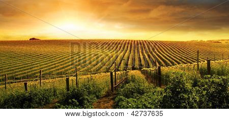 A Beautiful Sunset over a Barossa Vineyard