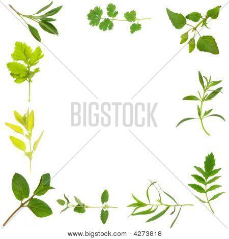 Herb Leaf Border