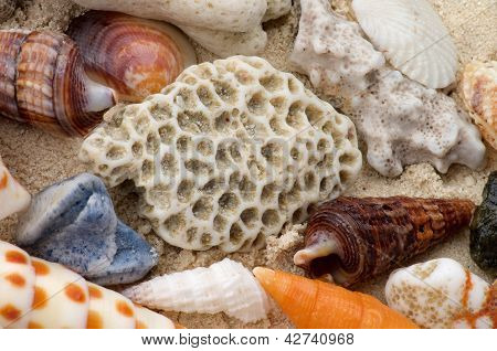 Ocean Shell Background