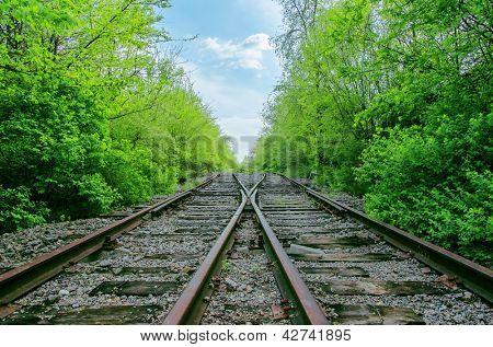 crossing of two railroads in green wood