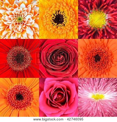 Collection Of Nine Red Flower Macros
