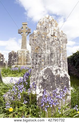 Old Ancient Irish Celtic Graveyard With Bluebells