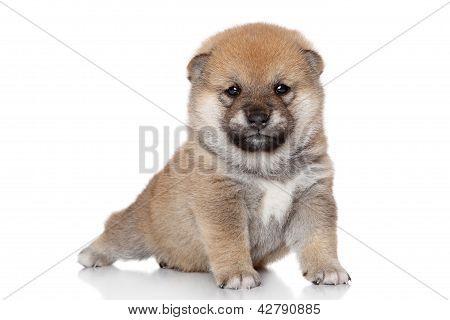 Dog In Yoga Pose