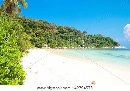Brightest Holiday Divine Coastline