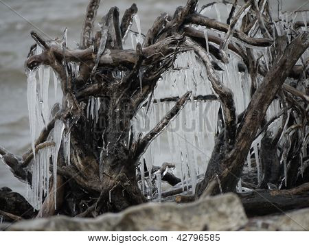 driftwood and ice