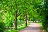 stock photo of pedestrians  - Pedestrian walkway for exercise lined up with beautiful tall trees - JPG